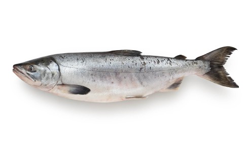 Тушка кеты морской (дикой) ПСГ с головой